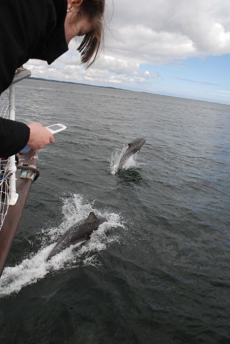 Dolphin trips Broughty Ferry
