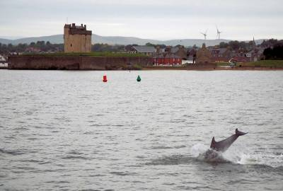 Dolphin at Broughty Castle from Badger