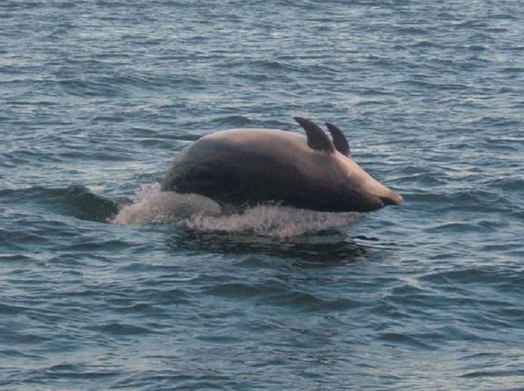 another upside down dolphin